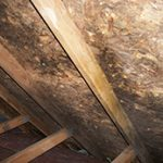 Mold Remediation in Berwyn, IL