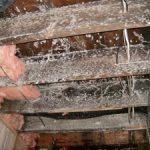 Mold-Remediation-Bloomington-MN