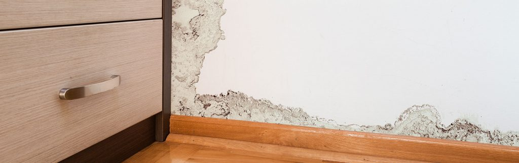 Mold Remediation in Brandon, FL