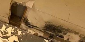 Mold-Remediation-Darien, IL