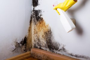 DIY mold removal by spraying mold with gloves