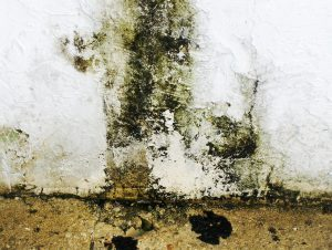 mold removal is needed on this wall in duluth, mn.