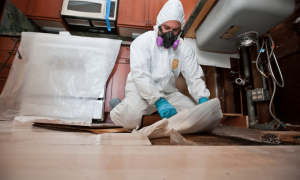 Mold Remediation in Fayetteville, NC