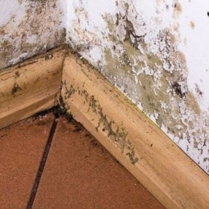 Mold Remediation for Fort Mill and Indian Land, SC