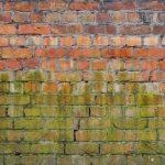 Mold Remediation Garden Grove CA
