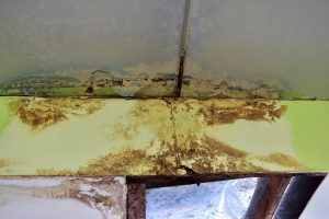 commercial mold remediation and removal services in glendale, CA are needed on this beam