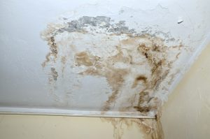 White-Mold-on-Ceiling