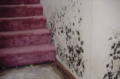 Mold Remediation – Cloquet Minnesota