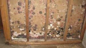 mold removal and remediation in Katy, TX - ServiceMaster Restoration by Century - mold inside the wall