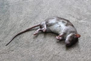 odor removal in Los Angeles County, CA - dead mouse smell