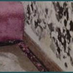 Mold-Remediation-Layton-UT
