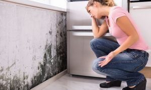 Mold-Remediation-Macungie-PA