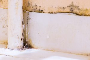 Mold removal and remediation services from ServiceMaster are needed for this moldy wall