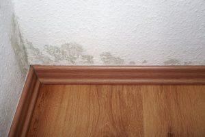 Mold-Remediation-Nampa-ID