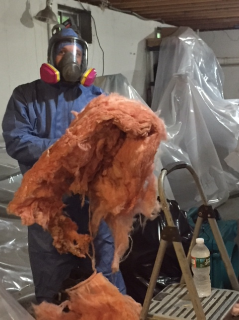 Animal Cleanup with Contaminated Insulation