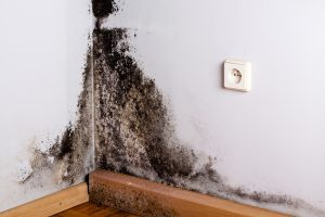 mold growing in the corner, needs mold removal and remediation service
