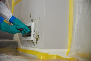 mold removal & remediation in pearland, tx