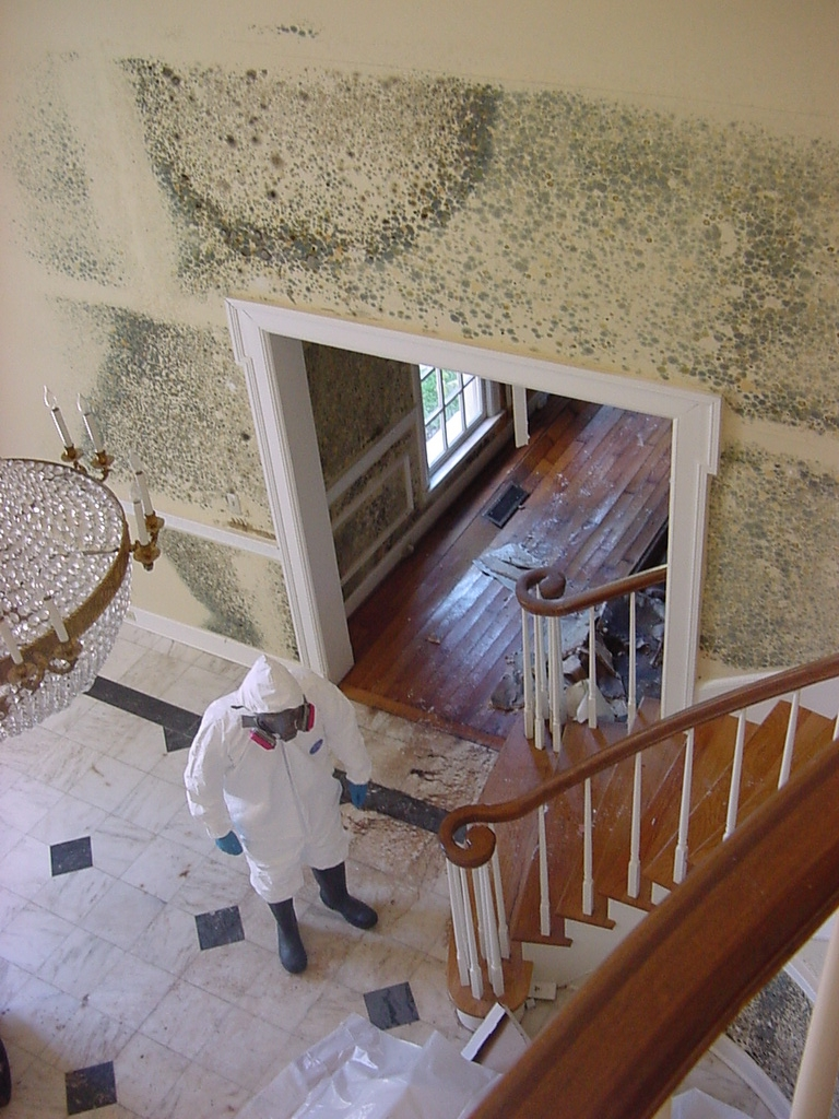 Mold Removal Money Saving Tips