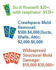 Mold removal cost mold removal diy mold removal money saving tips mold removal cost solutioingenieria Images