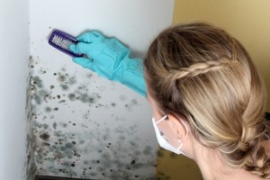 Mold Prevention Treatment