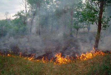 Fire Tornadoes