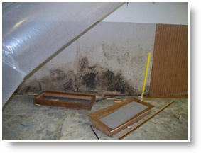 Mold Cleanup Rochester NY