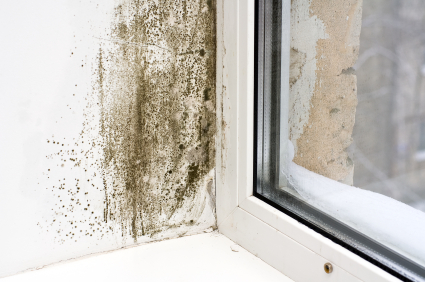 How to Prevent Mold Growth in Winter - Mold Prevention Tips and Guide
