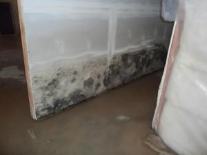 mold remediation Salt Lake Utah