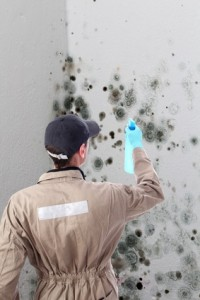 Mold removal for different mold types