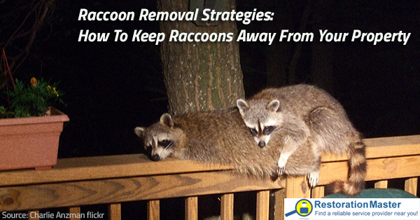 How To Keep Raccoons Away From Your Property