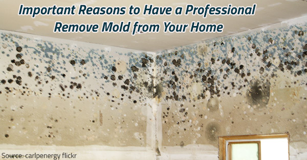 Prevent mold growth in your home.