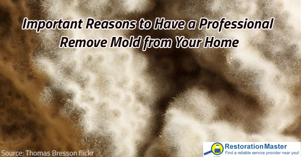 Professional mold remediation is efficient.