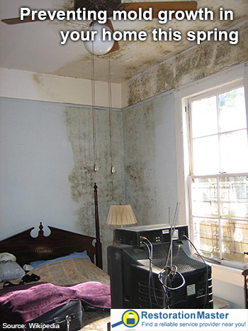 Mold Growth In A Home