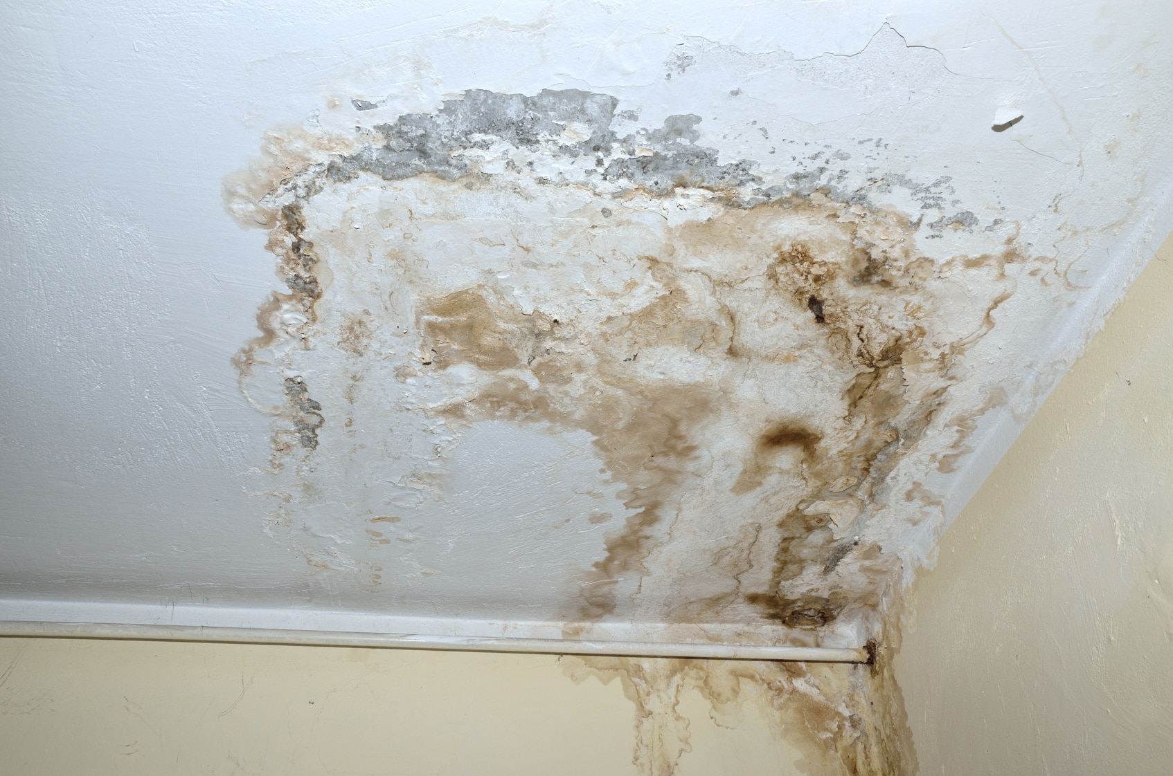 Do You Recognize The Early Signs Of Mold Damage?