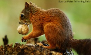 Animals that hoard food usually consume it during the winter months.