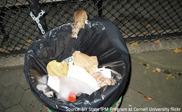 Pests find in clutter everything they need to survive.