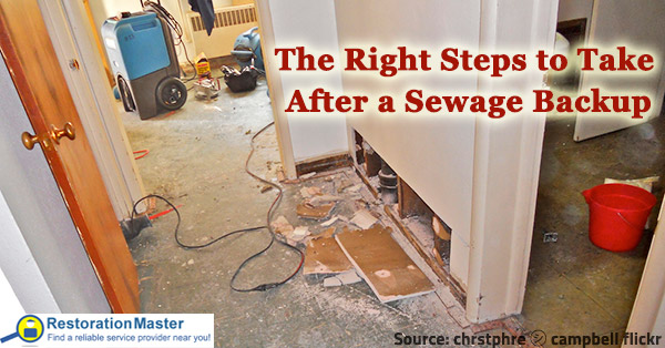 what to do after a sewage backup