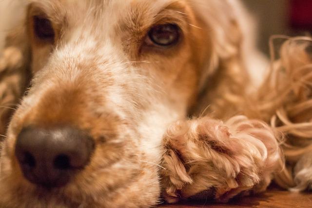 Sick Dog - mold growth