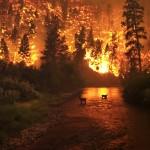 Homeowners should be aware of wildfires in their area and protect their homes with these wildfire safety tips.