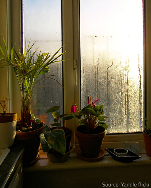 How Dehumidifiers Help Lower Moisture In Your Home