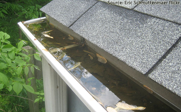 Make sure water can drain off the roof and away from the house.