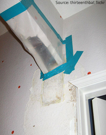 You may need to buy additional coverage for mold remediation.