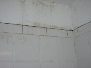 The Earlier You Discover The Presence Of Mold In Your Home, The Easier It  Will Be To Get Rid Of It. Mold Often Remains Hidden For A Long Period After  It Has ...