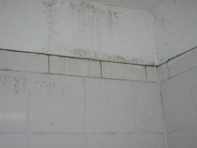 easy ways to get rid of bathroom mold - How To Get Rid Of Bathroom Mold