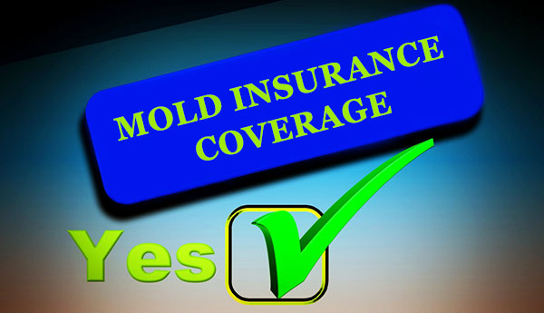 Is mold covered by your homeowners insurance policy?