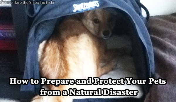 Pet safety during a natural disaster.