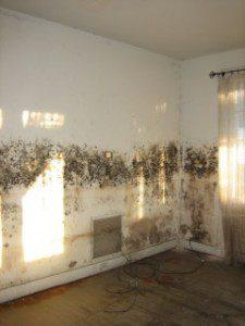 moldylivingroom