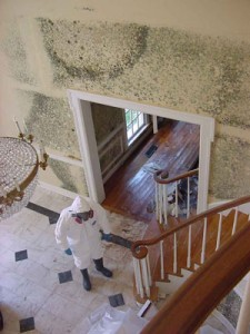 How To Remove Mold From Wood Floors Restorationmaster