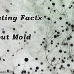 Everything you need to know about mold.