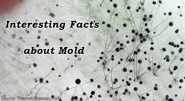 10 Facts About Mold Health Risks Mold Prevention